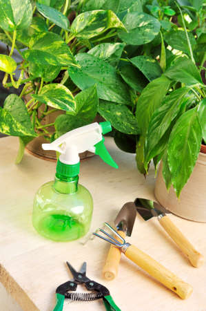 transplants: Gardening tools and houseplants - still life