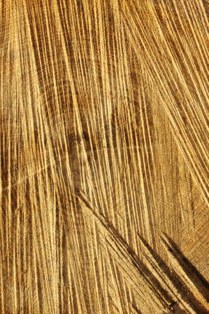 Detail of wooden cut texture - rings and saw cuts - oak - background photo