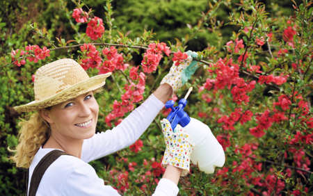 Young woman spraying tree photo