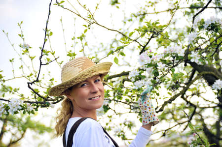 age 30 35 years: Young woman gardening - in apple tree orchard Stock Photo