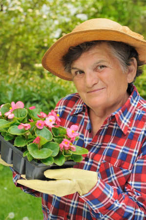 Senior woman - gardening photo