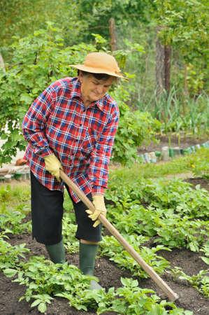 75 80: Senior woman gardening