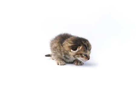 Kitten over white background photo