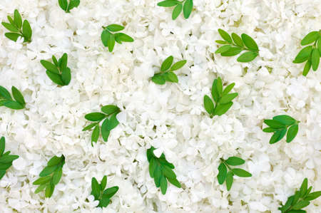 Guelder rose blossoms and myrtle leaves - background photo