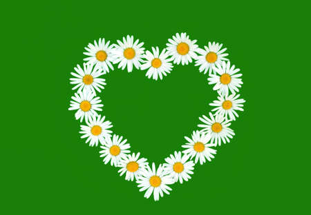 Daisy in love shape over green background photo