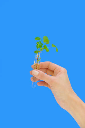 Hand holding tube with fresh  sorel (oxalis) Stock Photo - 8805645
