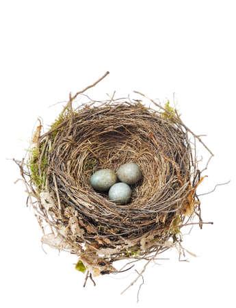 Detail van blackbird eieren in nest geïsoleerd op wit