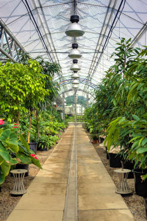agricultural engineering: Flowers in modern greenhouse