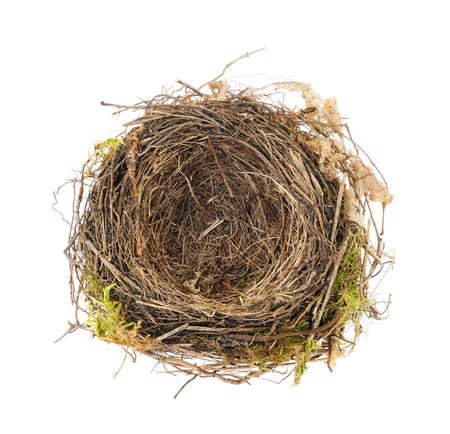 Detail of blackbird nest isolated on white