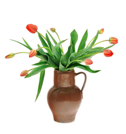 Red tulips in old fashioned jug isolated on white background photo