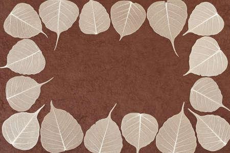 Skeletal leaves over brown handmade paper - frame photo