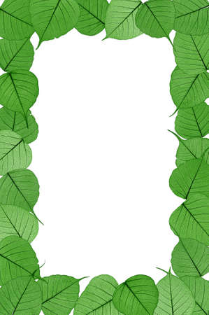 Skeletal leaves on white background - frame . Clipping path included. photo