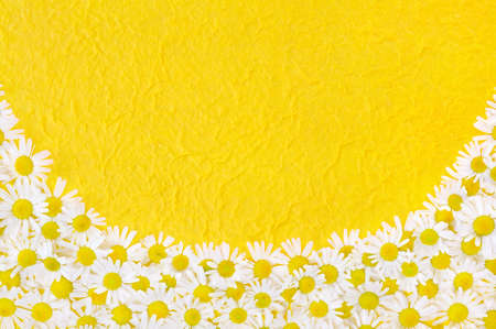 Group of Chamomile flower heads over handmade paper � frame