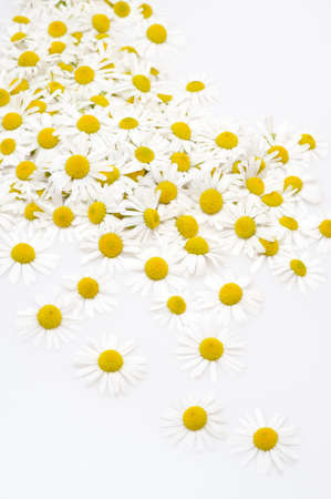 Group of Chamomile flower heads isolated on white background Stock Photo - 10618816