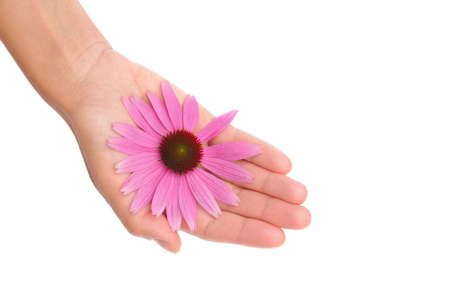 Hand of young woman holding Echinacea flower Stock Photo - 10682372