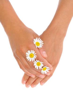 homeopatia: Manos de una mujer joven con cabezas de flores de manzanilla