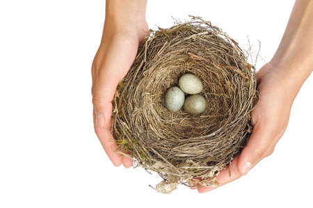 above 30: Young woman holding blackbird nest over white background Stock Photo