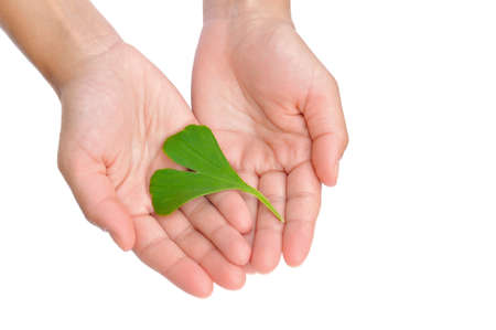 Hands of young woman holding ginkgo leaf photo