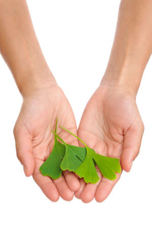 Hands of young woman holding ginkgo leaves Stock Photo - 10711250