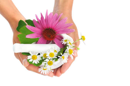 daises: Young  woman holding mortar with herbs - Echinacea, ginkgo, chamomile