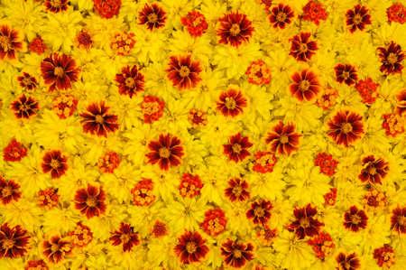 lantana: Rudbeckia laciniata, Lantana camara, Tagetes - flower heads Stock Photo