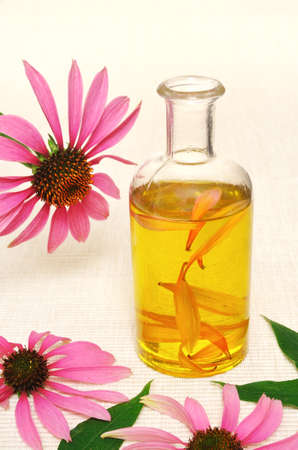Coneflower essential  oil in bottle - stillife photo