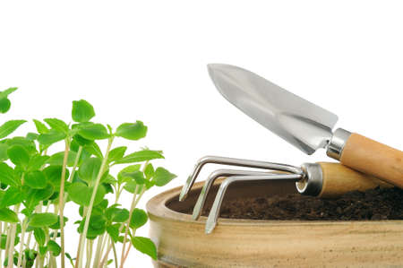 transplants: Young impatiens flowers and gardening tools, isolated on white Stock Photo