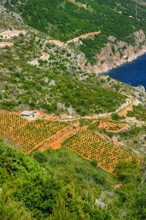 Vineyards, southern coast of Hvar island, west of Sveta Nedjelja, Croatia Stock Photo - 16279623