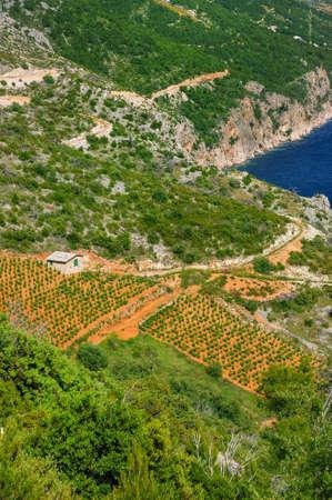 Vineyards, southern coast of Hvar island, west of Sveta Nedjelja, Croatia Stock Photo - 16279623