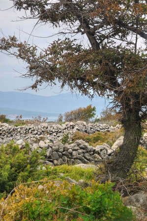 Pastures, drystone walls near Rudine, Krk island, Croatia Stock Photo - 16279548