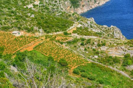 Vineyards, southern coast of Hvar island, west of Sveta Nedjelja, Croatia Stock Photo - 16388870