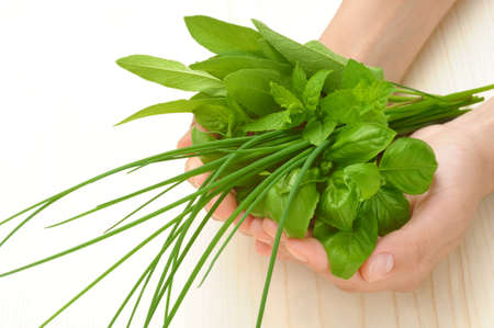 Hands of young woman holding fresh herbs, basil, chive, sage photo