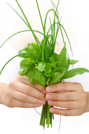 Hands of young woman holding fresh herbs, basil, chive, sage Stock Photo - 17041087