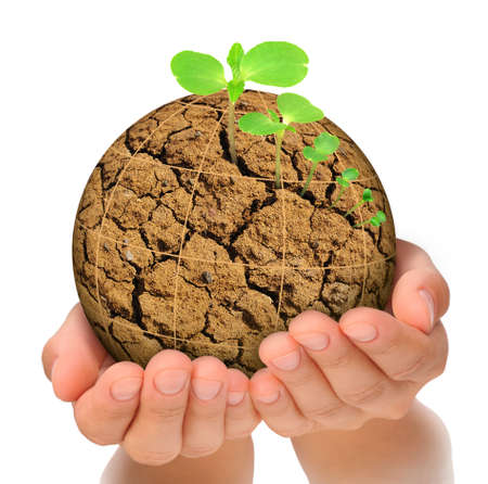 Plant growing out of parched planet in hands, evolution concept