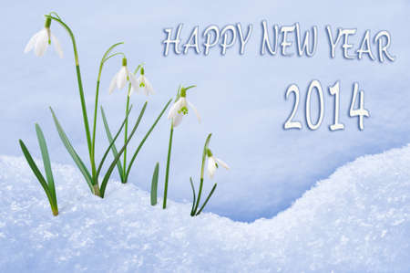 Happy New Year 2014 greeting card, group of snowdrops photo