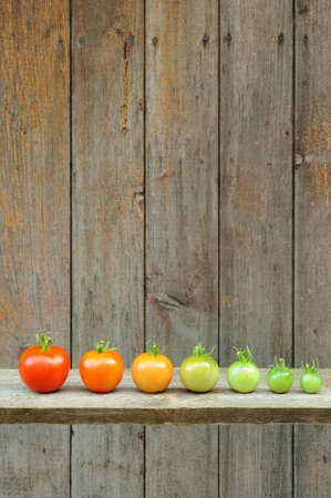 Evolution of red tomato - maturing process of the fruit ? stages of development