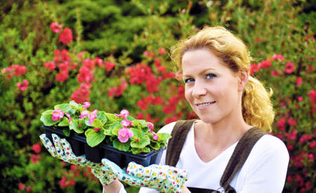 Young woman gardening, holding young flower plants, container-grown plant, woman planting begonia seedlings in garden photo