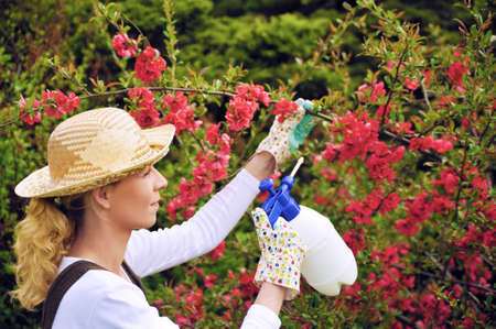 Young woman spraying tree in garden, the gardener takes care of the quince tree in orchard, holding spray bottle, happy young lady applying an insecticide or a fertilizer to her fruit trees, using a sprayer photo