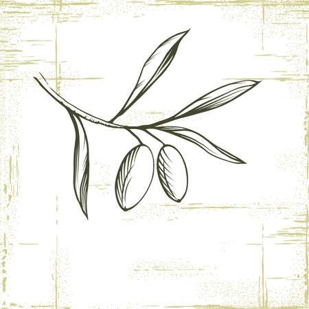 Olive oil Vector decorative olive branch  For labels, pack  Illustration