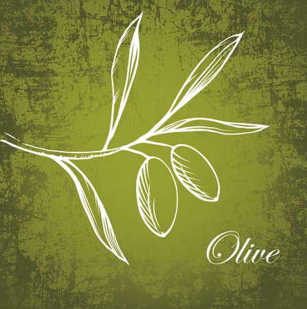 rama de olivo: Vector olive branch en el papel viejo Vectores