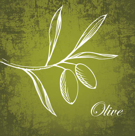 green olive: Vector olive branch on old paper