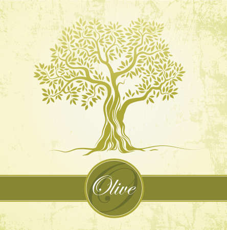 Olive tree   Olive oil  Vector  olive tree  For labels, pack  Vector