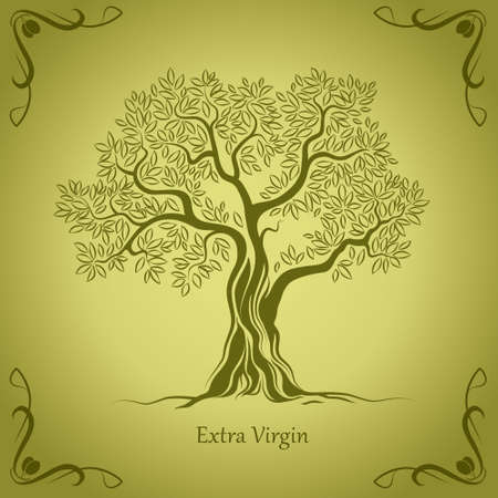 Olive tree   Olive oil  Vector  olive tree  For labels, pack