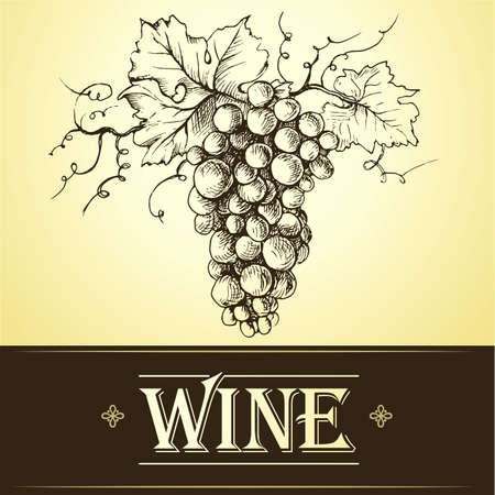 bunch: Wine label with grapes . bunch of grapes