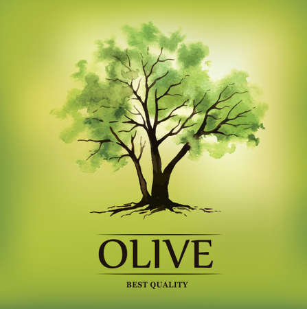 Olive oil. Vector  olive tree. For labels, pack Vector