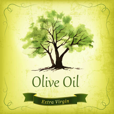 olive oil bottle: Hand drawn olive tree illustration with watercolor