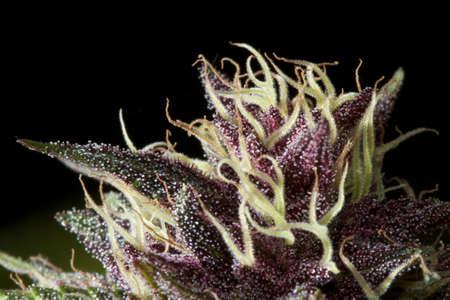 growers: weed