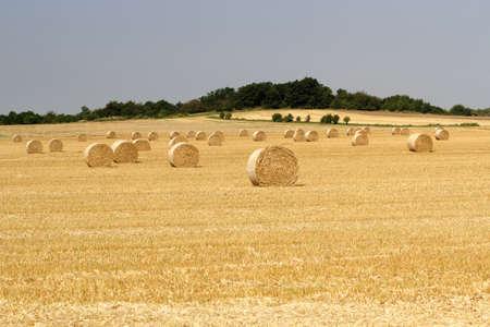 hay field: hay field
