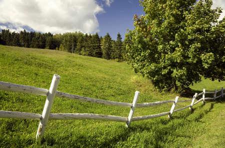 cerca blanca: Campo verde con una cerca blanca en un d�a soleado Foto de archivo
