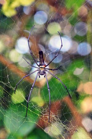 segmented bodies: Spiders Stock Photo